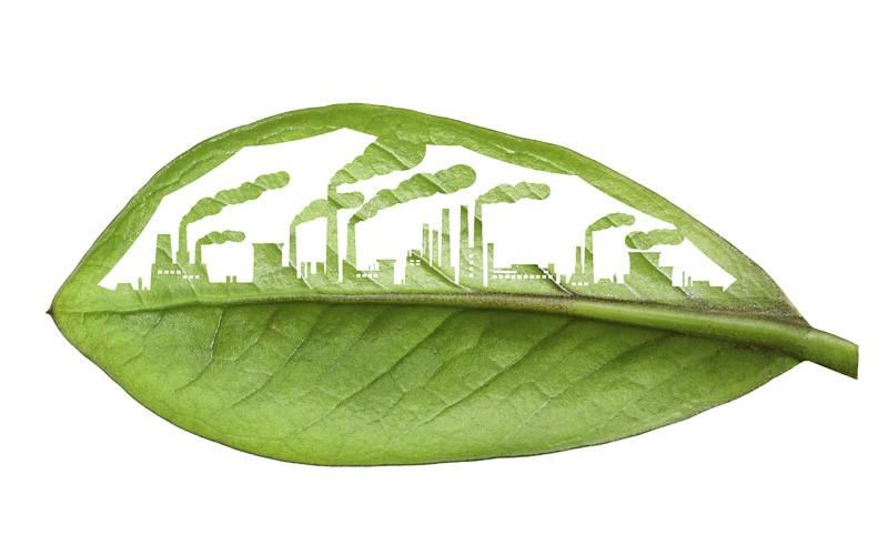 بازاریابی سبز چیست و متولیان آن چه کسانی هستند؟